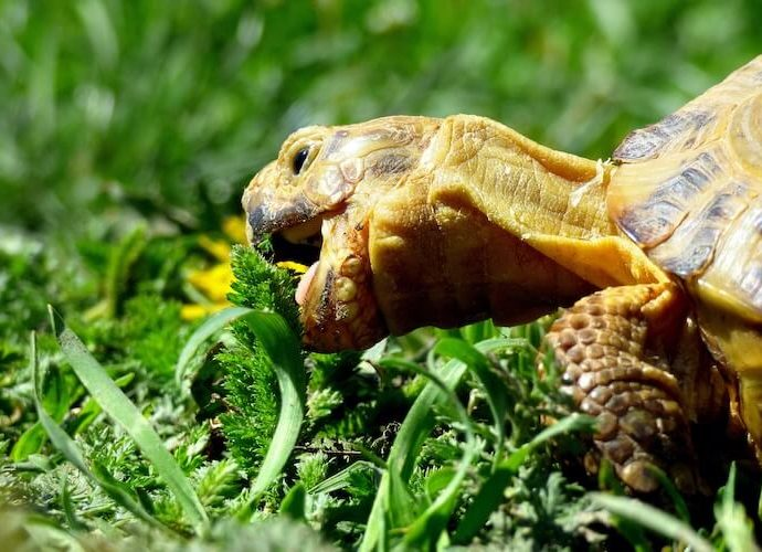 Is It Time To Speak Much More Turtles